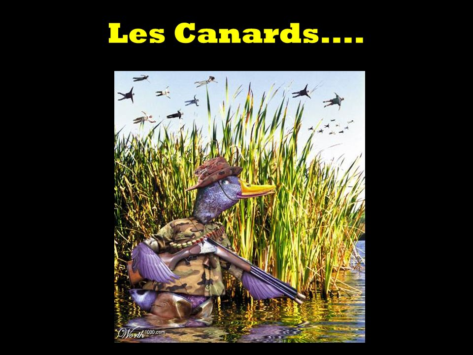 Les Canards....