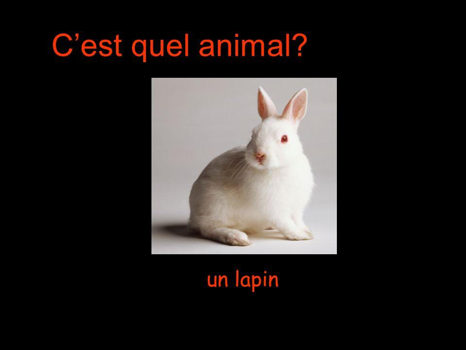 Cest quel animal un lapin