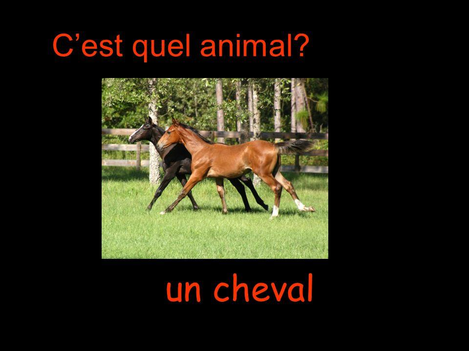 Cest quel animal un cheval