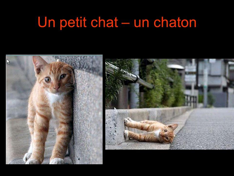 Un petit chat – un chaton
