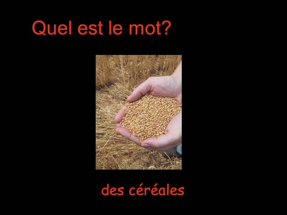 Quel est le mot des céréales