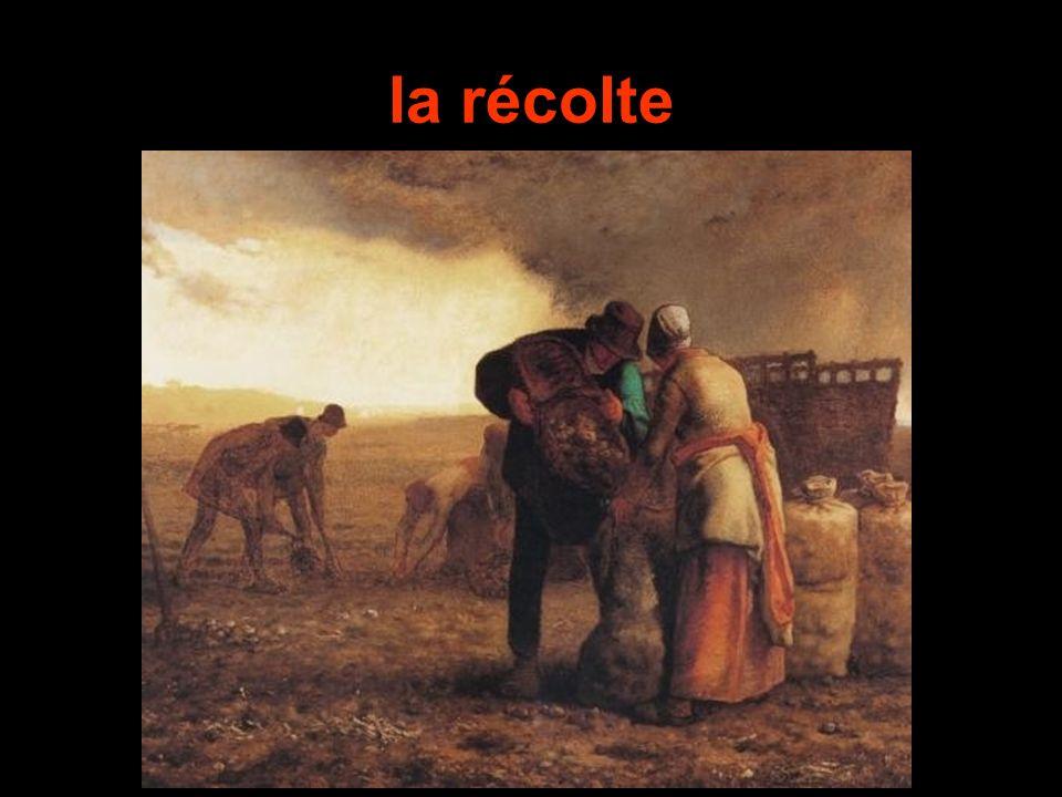 which one? a. Lequel? b. Lesquels?d. Lesquelles? Papa a vendu cette vache. __? c. Laquelle?
