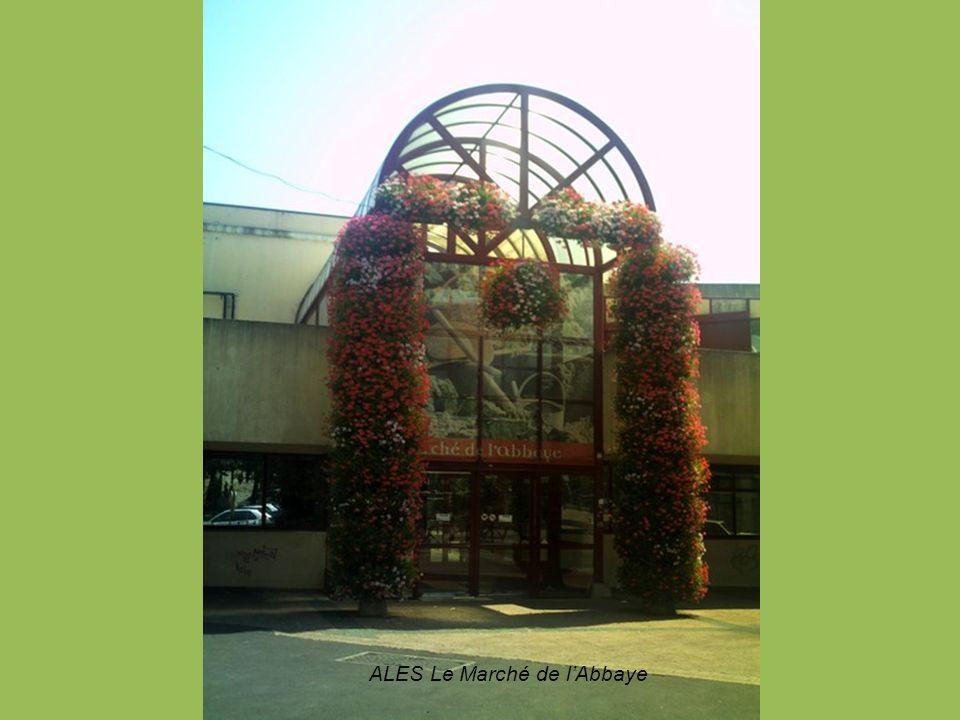 Images de Camargue Groupe flamants roses