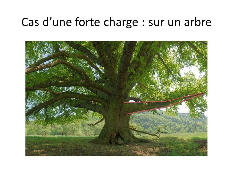 Cas dune forte charge : sur un arbre