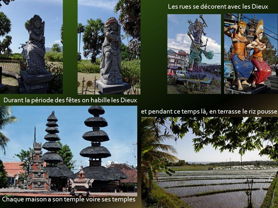 Chaque maison a son temple voire ses temples Durant la période des fêtes on habille les Dieux Les rues se décorent avec les Dieux et pendant ce temps là, en terrasse le riz pousse