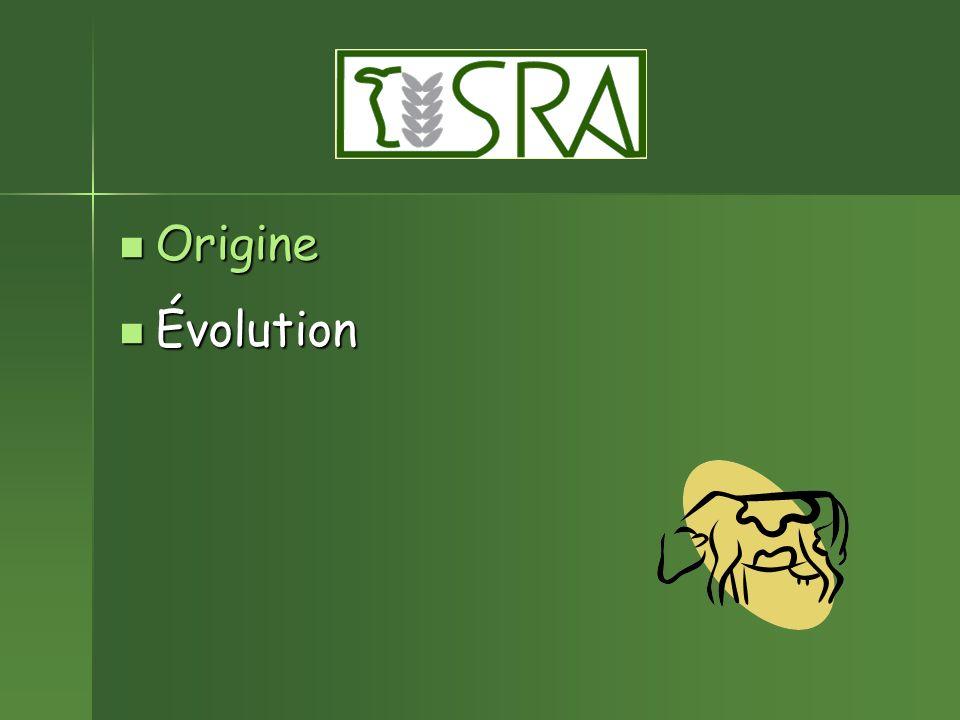Origine Origine Évolution Évolution