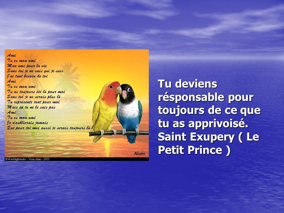 Tu deviens résponsable pour toujours de ce que tu as apprivoisé. Saint Exupery ( Le Petit Prince )