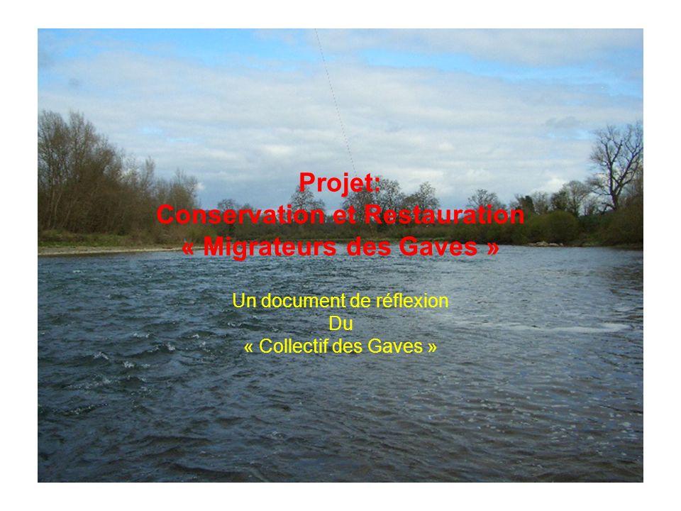 Projet: Conservation et Restauration « Migrateurs des Gaves » Un document de réflexion Du « Collectif des Gaves »