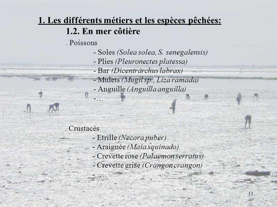 11. Crustacés - Etrille (Necora puber) - Araignée (Maia squinado) - Crevette rose (Palaemon serratus) - Crevette grise (Crangon crangon) - …. 1. Les d