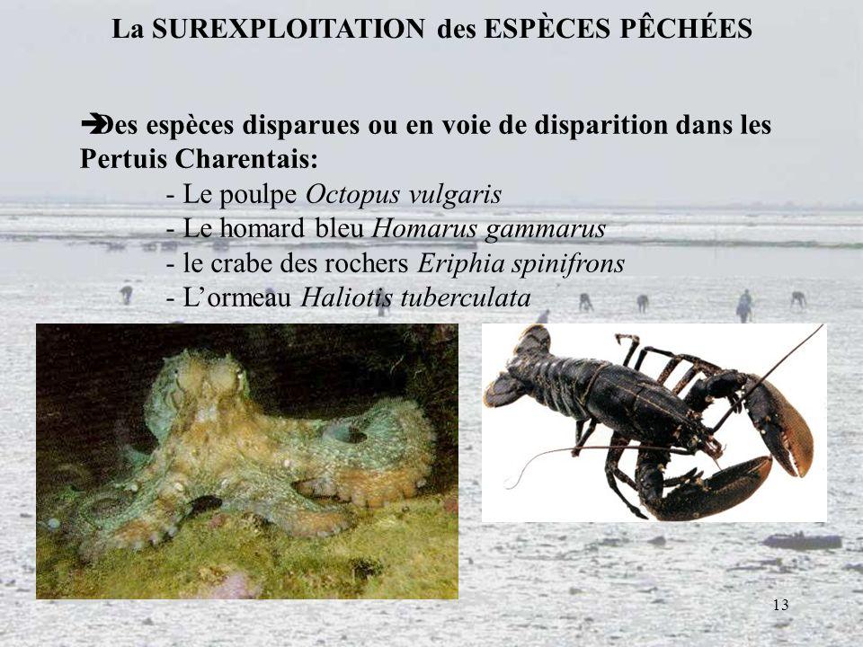 13 La SUREXPLOITATION des ESPÈCES PÊCHÉES Des espèces disparues ou en voie de disparition dans les Pertuis Charentais: - Le poulpe Octopus vulgaris -
