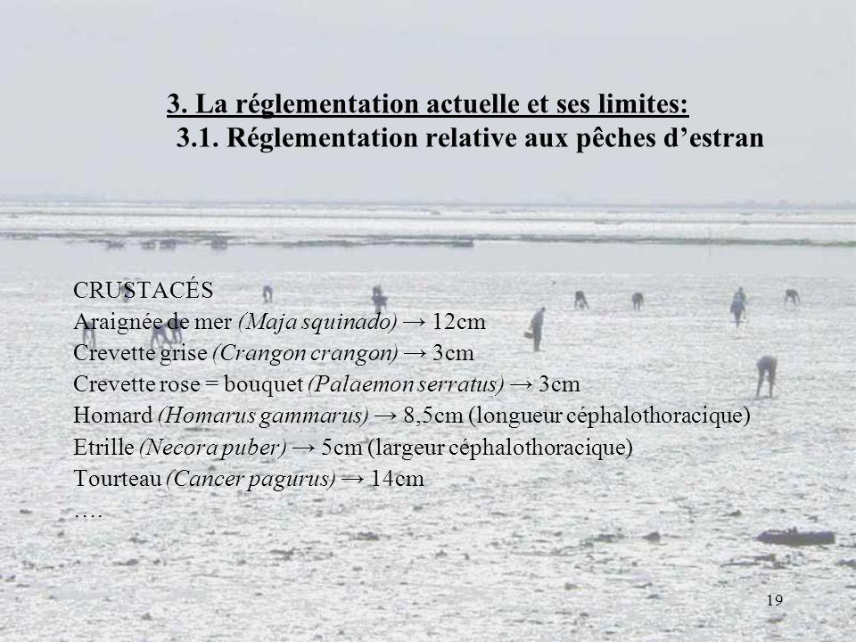 19 3. La réglementation actuelle et ses limites: 3.1. Réglementation relative aux pêches destran CRUSTACÉS Araignée de mer (Maja squinado) 12cm Crevet
