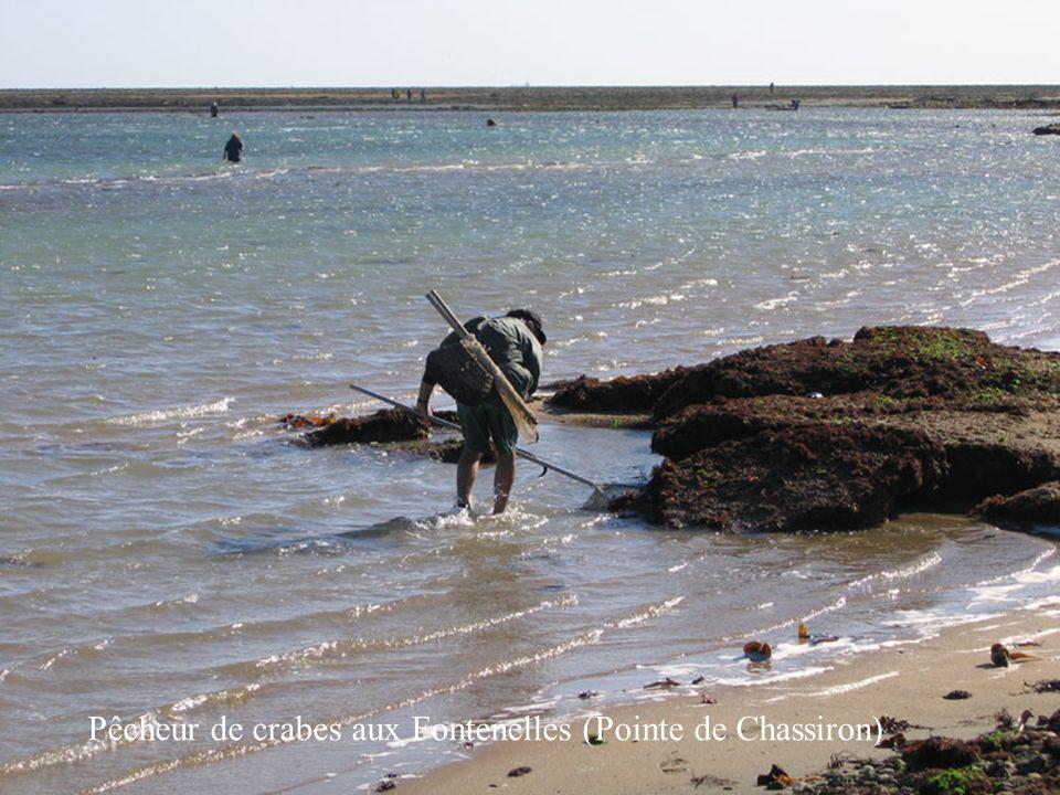 6 Pêcheur de crabes aux Fontenelles (Pointe de Chassiron)
