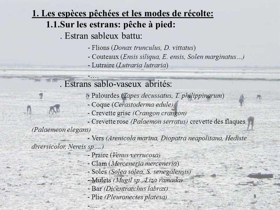 8 1. Les espèces pêchées et les modes de récolte: 1.1.Sur les estrans: pêche à pied:. Estran sableux battu: - Flions (Donax trunculus, D. vittatus) -