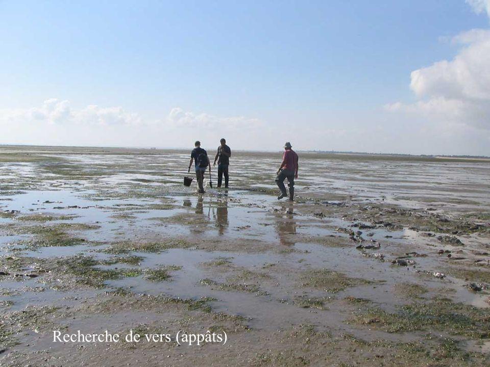 10 1.Les espèces pêchées et les modes de récolte: 1.1.Sur les estrans: pêche à pied:.