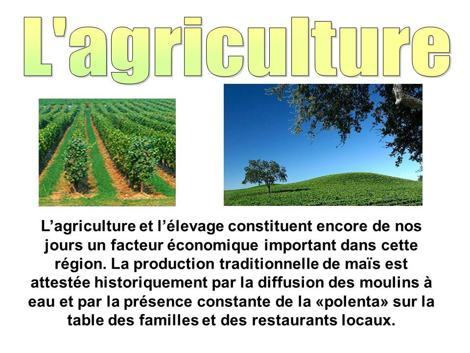 Lagriculture et lélevage constituent encore de nos jours un facteur économique important dans cette région. La production traditionnelle de maïs est a