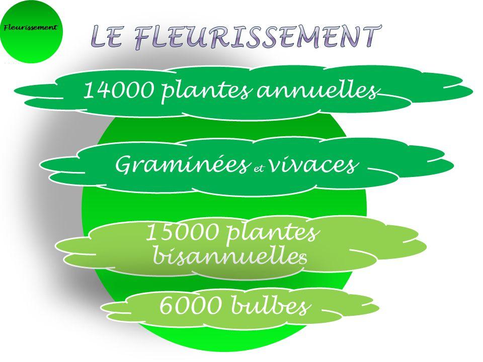 Fleurissement 14000 plantes annuelles Graminées et vivaces 15000 plantes bisannuelle s 6000 bulbes