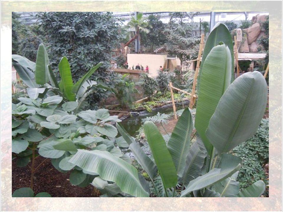 Quelques mètres plus loin, c'est un grand mur végétal qui nous accueille. Chargé de plus de 2.400 pots, celui-ci n'est pas encore très fourni mais d'i