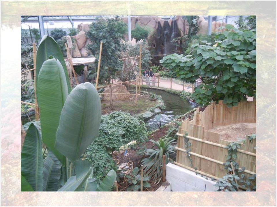 Découpée en plusieurs 'terres', la serre abrite quelque 120 espèces végétales et 150 espèces animales dans un décor qui nous plonge totalement en plei