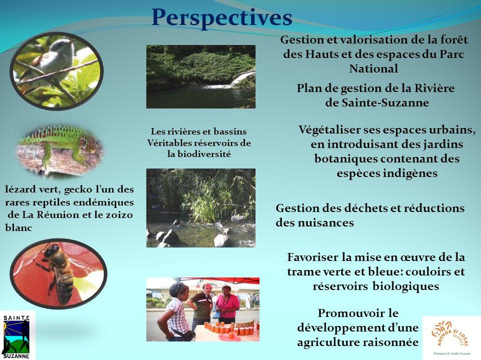 Les rivières et bassins Véritables réservoirs de la biodiversité lézard vert, gecko lun des rares reptiles endémiques de La Réunion et le zoizo blanc