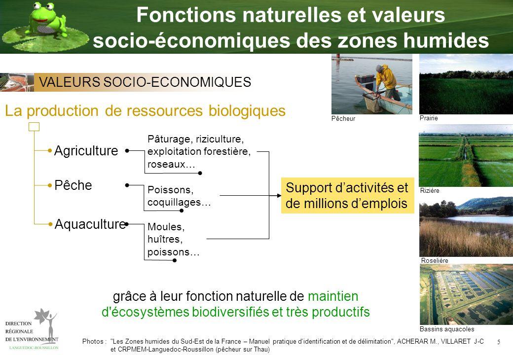 5 La production de ressources biologiques Agriculture Pâturage, riziculture, exploitation forestière, roseaux… Aquaculture Moules, huîtres, poissons…