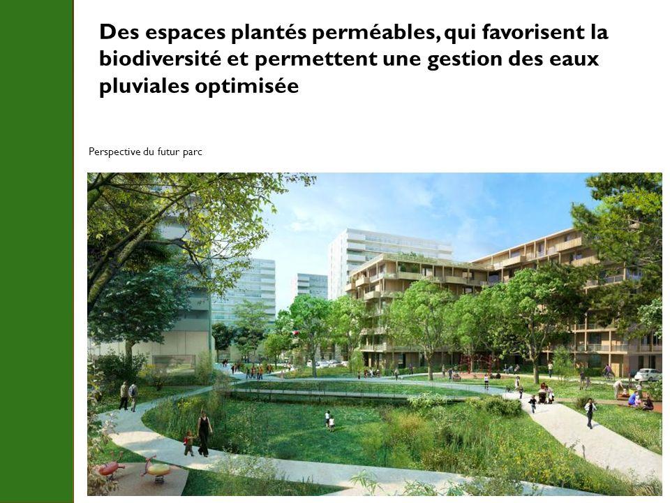Des espaces plantés perméables, qui favorisent la biodiversité et permettent une gestion des eaux pluviales optimisée Perspective du futur parc