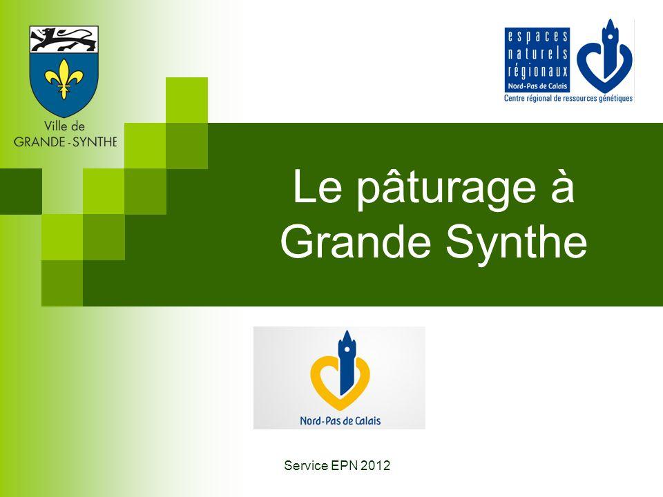Le pâturage à Grande Synthe Service EPN 2012