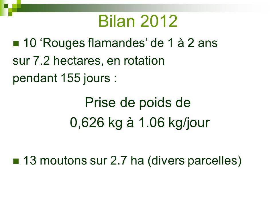 Bilan 2012 10 Rouges flamandes de 1 à 2 ans sur 7.2 hectares, en rotation pendant 155 jours : Prise de poids de 0,626 kg à 1.06 kg/jour 13 moutons sur