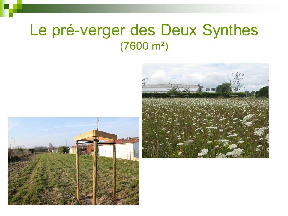 Le pré-verger des Deux Synthes (7600 m²)
