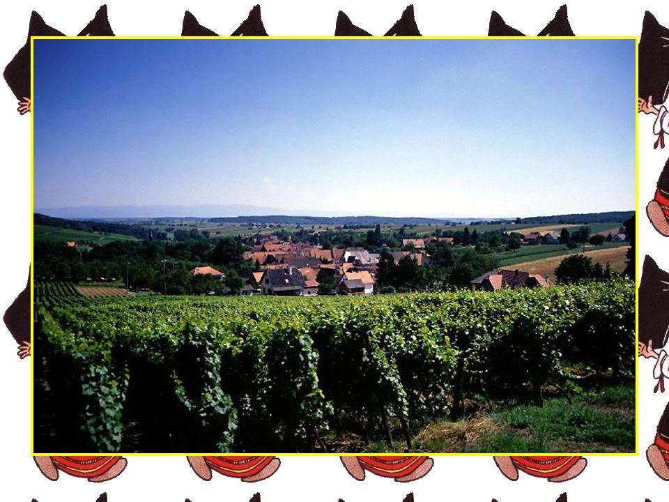 Original par sa diversité, l'Alsace vous offre un éventail historique, gastronomique, culturel et muséographique très étendu. En Alsace, le massif des