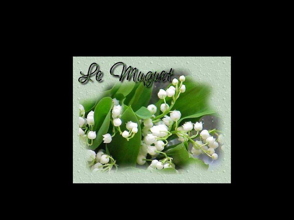 Le muguet a longtemps été le symbole du renouveau et du printemps, il était donc logique qu il devienne symbole du bonheur et porte-bonheur.