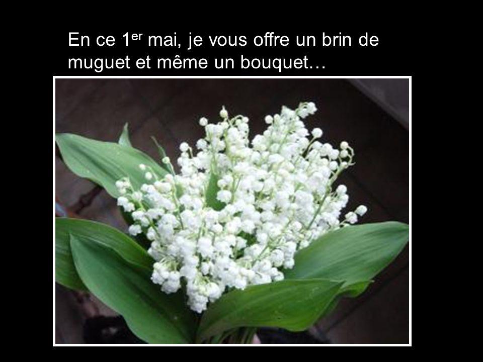 En ce 1 er mai, je vous offre un brin de muguet et même un bouquet…