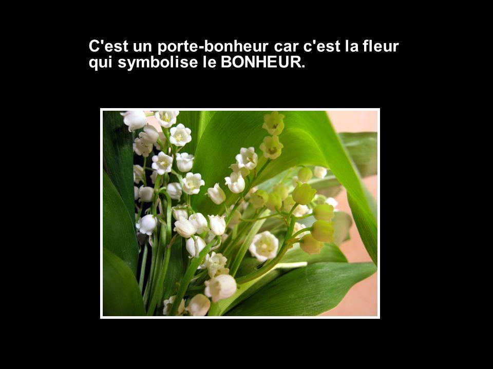 C'est un porte-bonheur car c'est la fleur qui symbolise le BONHEUR.