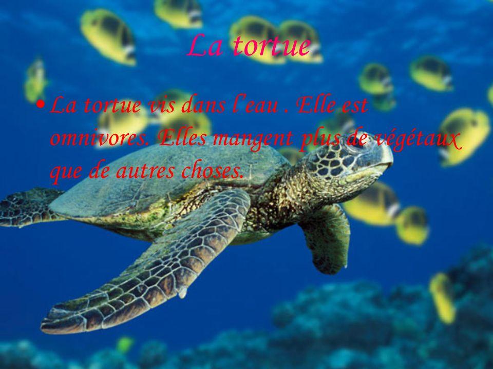 La tortue La tortue vis dans leau.Elle est omnivores.