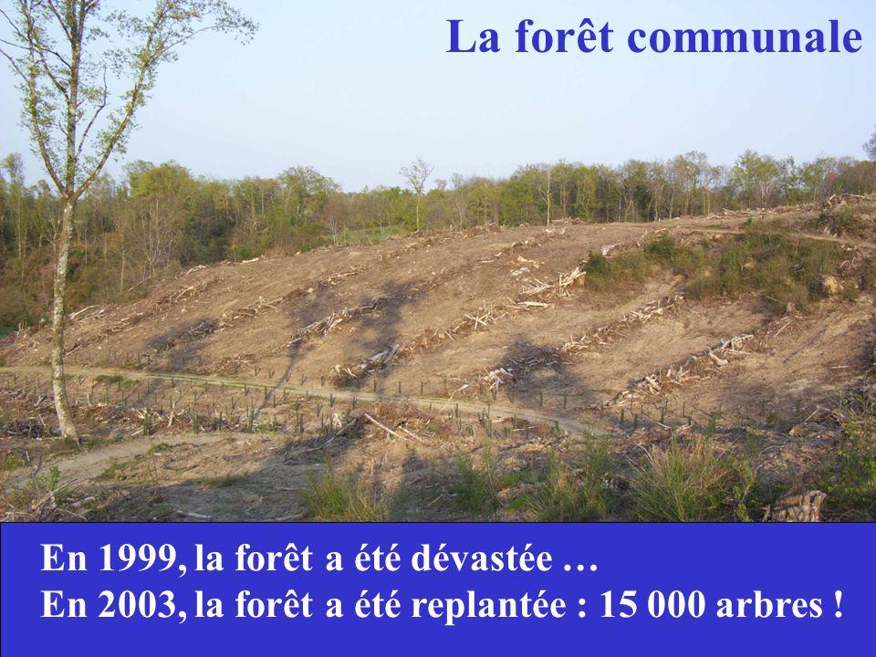 La forêt communale En 1999, la forêt a été dévastée … En 2003, la forêt a été replantée : 15 000 arbres !