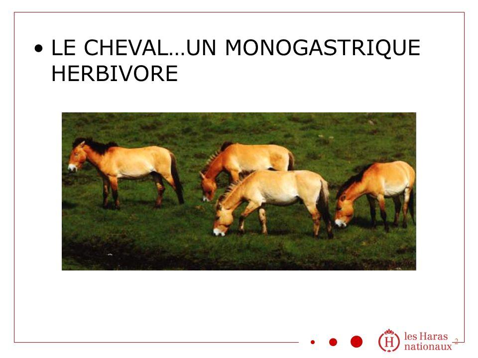 LE CHEVAL…UN MONOGASTRIQUE HERBIVORE 2