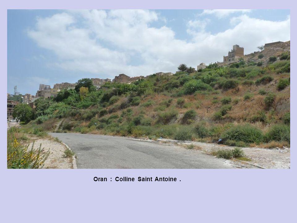 Oran : Colline les Planteurs