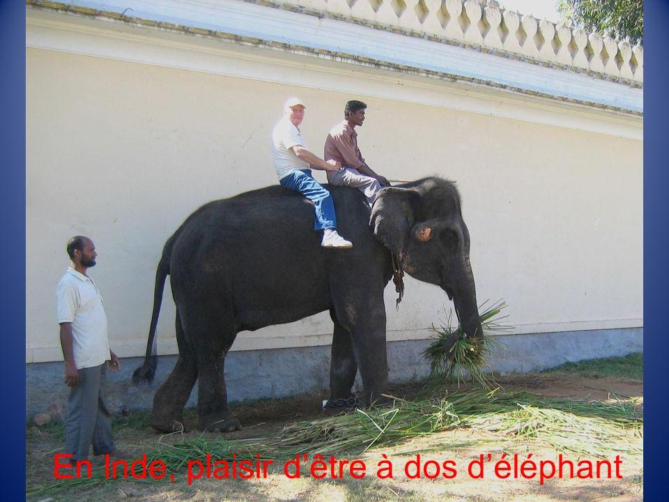 En Inde, plaisir dêtre à dos déléphant