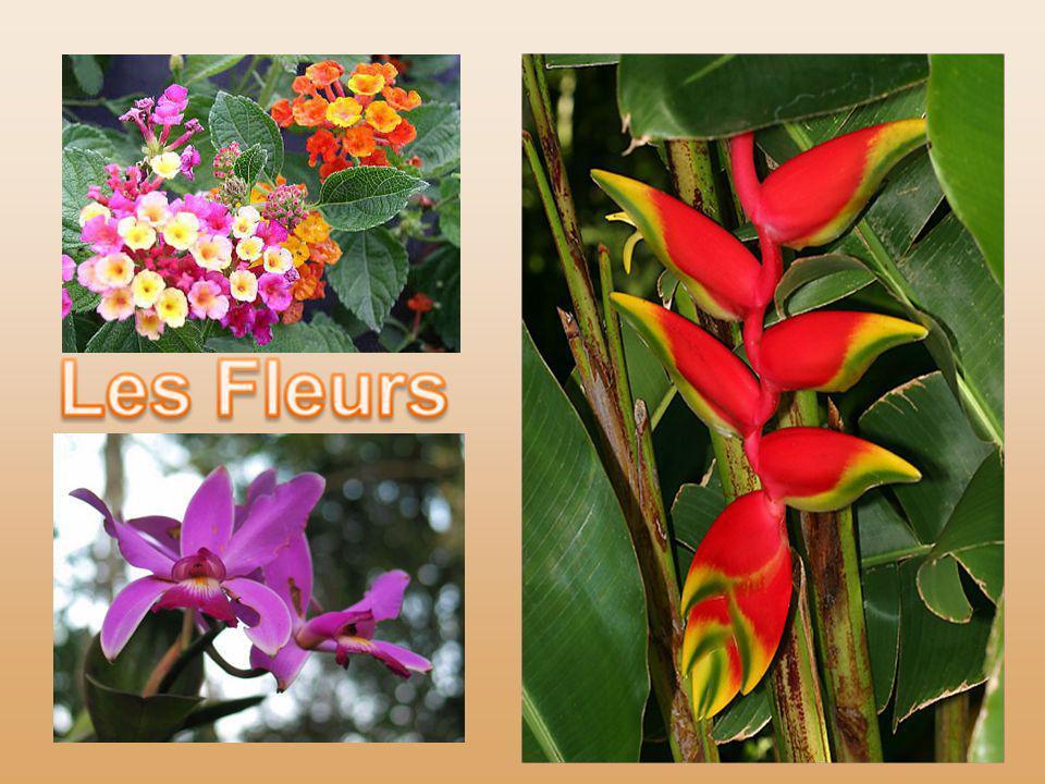 La rareté des fleurs est un élément surprenant : en pleine lumière vagabondent des plantes aériennes et des orchidées accrochées au sommet des arbres
