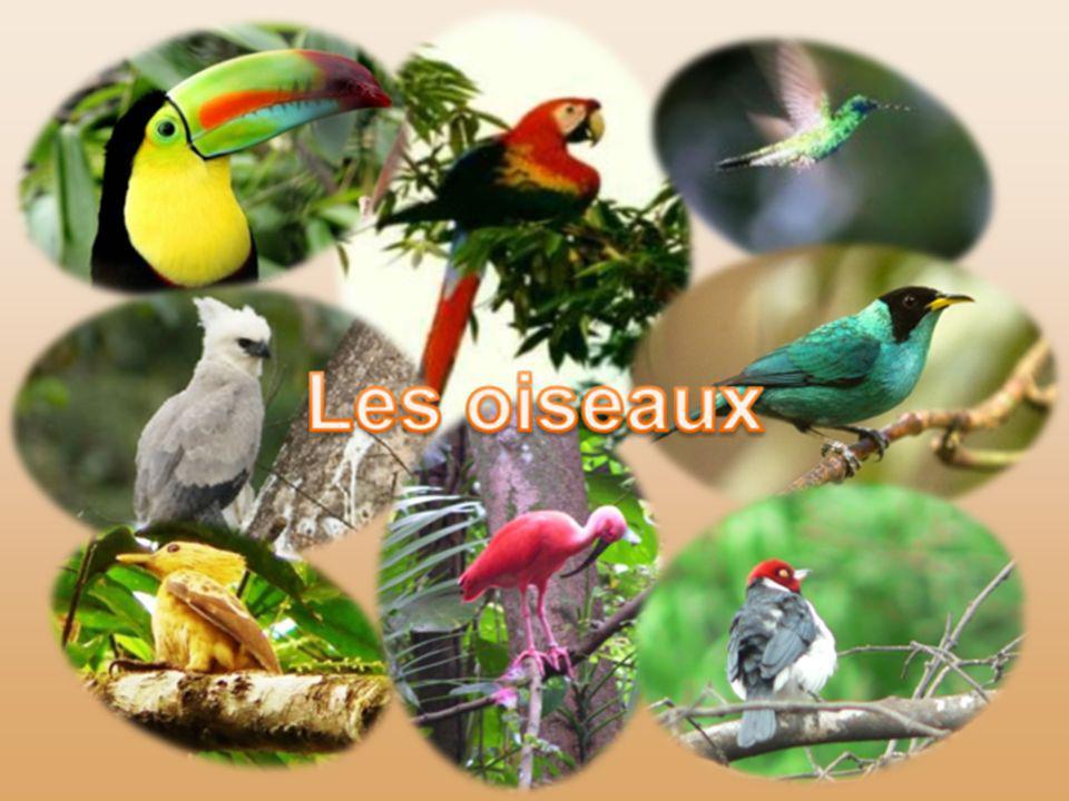 Les arbres abritent généralement une faune abondante et variée ; on y trouve des oiseaux par milliers, aras, toucans, harpies, oiseaux-mouches, et les