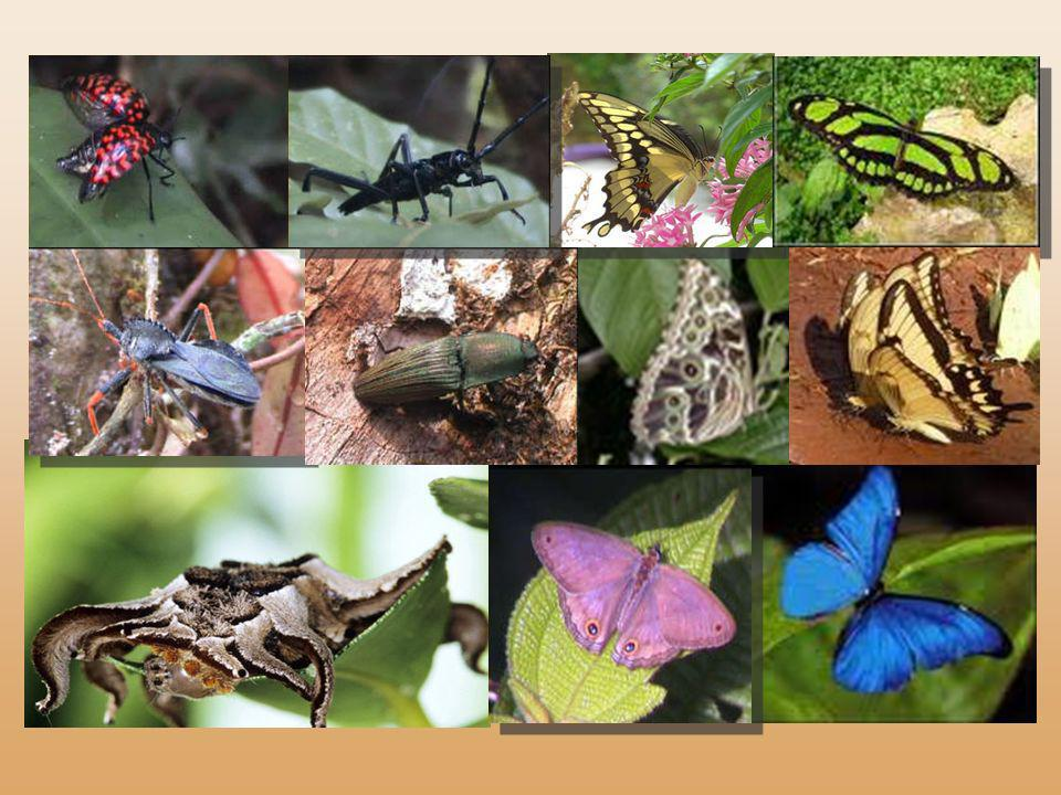 Entre les arbres et les feuilles géantes, c'est un carnaval de bestioles qui hante la forêt : des myriades de papillons, des phalènes au masque de hib