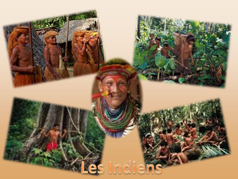 Les Indiens de la forêt amazonienne forment plusieurs peuples et de nombreuses tribus. Si toutes partagent un mode de vie adapté au cadre naturel, cha