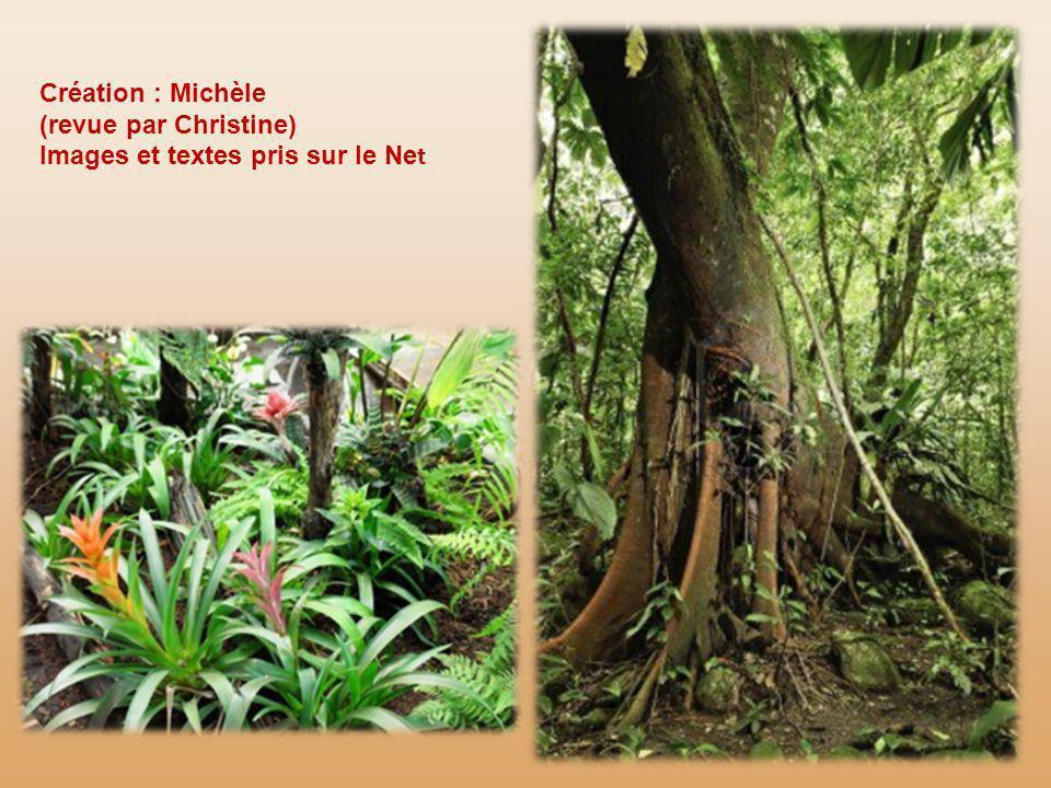 Les indiens de la forêt pluviale, uniquement les hommes, modèlent ces objets magiques. Le style est naïf. Lors de rites équinoxiaux, ils les offrent a