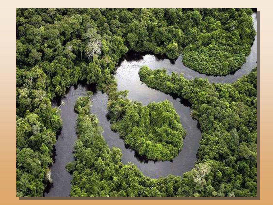 Traversée parle fleuve « Amazone » la forêt amazonienne est surnommée le »poumon de la planète ». Elle sétend sur 6 millions de km² situés sur 9 pays