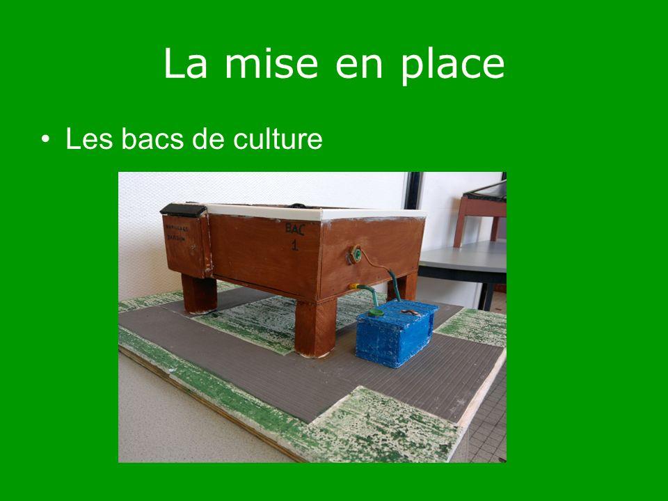 La mise en place Les bacs de culture