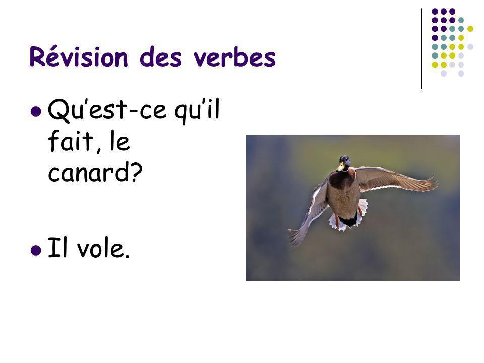 Révision des verbes Quest-ce quil fait, le canard? Il vole.