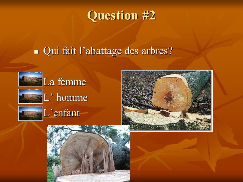 Question #2 Qui fait labattage des arbres? Qui fait labattage des arbres? La femme La femme L homme L homme Lenfant Lenfant