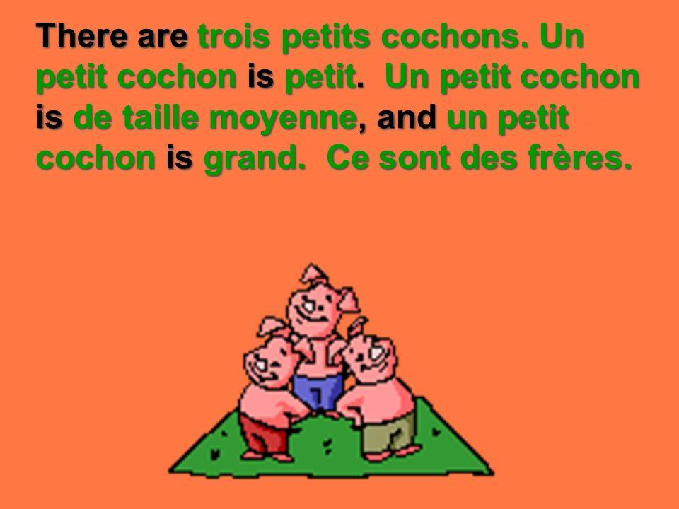 There are trois petits cochons. Un petit cochon is petit. Un petit cochon is de taille moyenne, and un petit cochon is grand. Ce sont des frères.