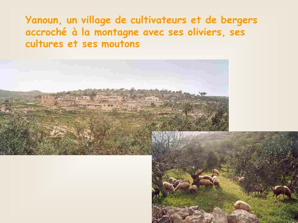 Yanoun, un village de cultivateurs et de bergers accroché à la montagne avec ses oliviers, ses cultures et ses moutons