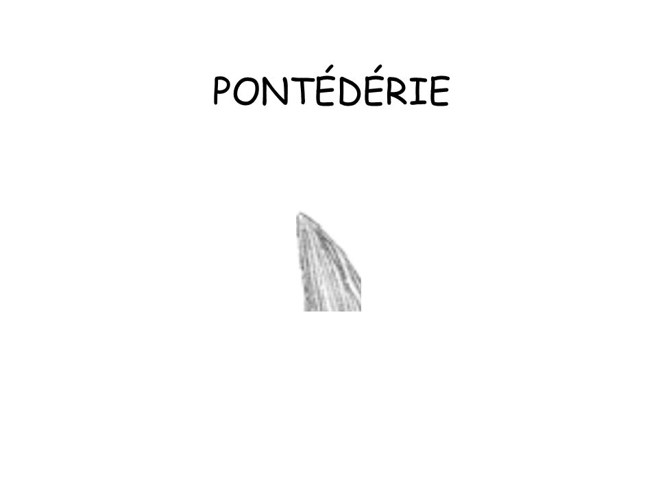PONTÉDÉRIE
