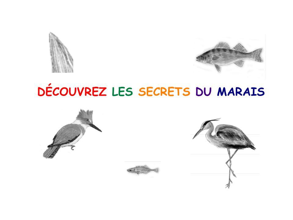 DÉCOUVREZ LES SECRETS DU MARAIS